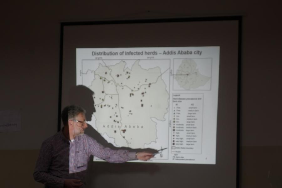 presenting cattle data in ethiopia
